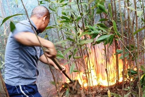 Cháy rừng dữ dội ở Hải Phòng - ảnh 1