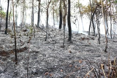 Cháy rừng dữ dội ở Hải Phòng - ảnh 2