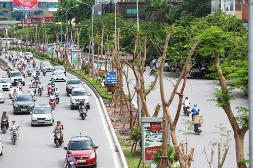 Chủ tịch Hà Nội: 'Tôi trực tiếp chỉ đạo việc thiết kế, chăm sóc cây xanh' - ảnh 1
