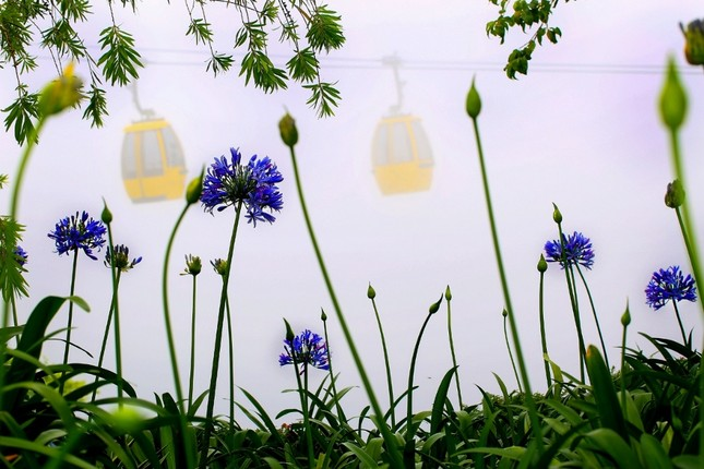 Bà Nà Hills: Thiên đường hoa trong mây - ảnh 4