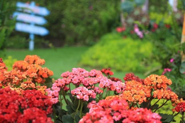 Bà Nà Hills: Thiên đường hoa trong mây - ảnh 7