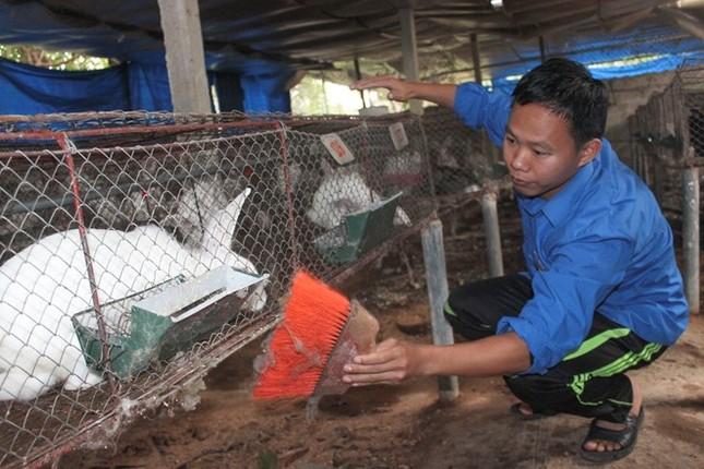 Cử nhân văn thành triệu phú nhờ nuôi thỏ - ảnh 1
