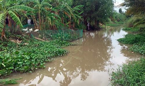 Người dân miền Tây vây bắt cá sấu dưới kênh - ảnh 1