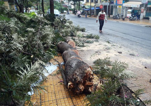 Hàng loạt cây xanh ở Đà Lạt đổ, hai người bị thương - ảnh 1