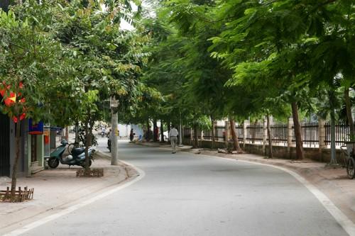 Những con phố tên hoa ở Hà Nội - ảnh 1