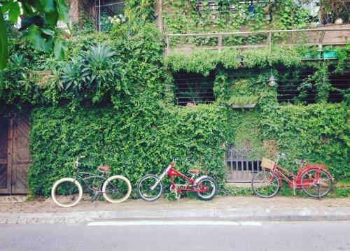 Những con phố tên hoa ở Hà Nội - ảnh 2