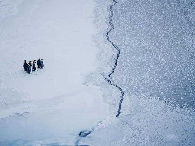 Nguy cơ tuyệt chủng từ biến đổi khí hậu - ảnh 1