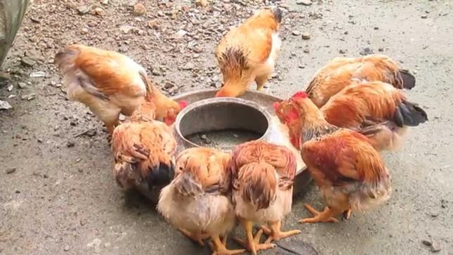 Vi khuẩn trong thịt gà có thể kháng lại thuốc kháng sinh - ảnh 1