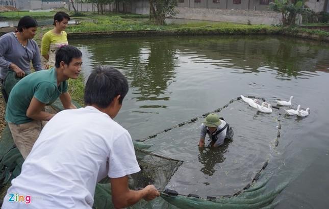 Lội bùn thu hoạch cá chép trước ngày ông Táo về trời - ảnh 1