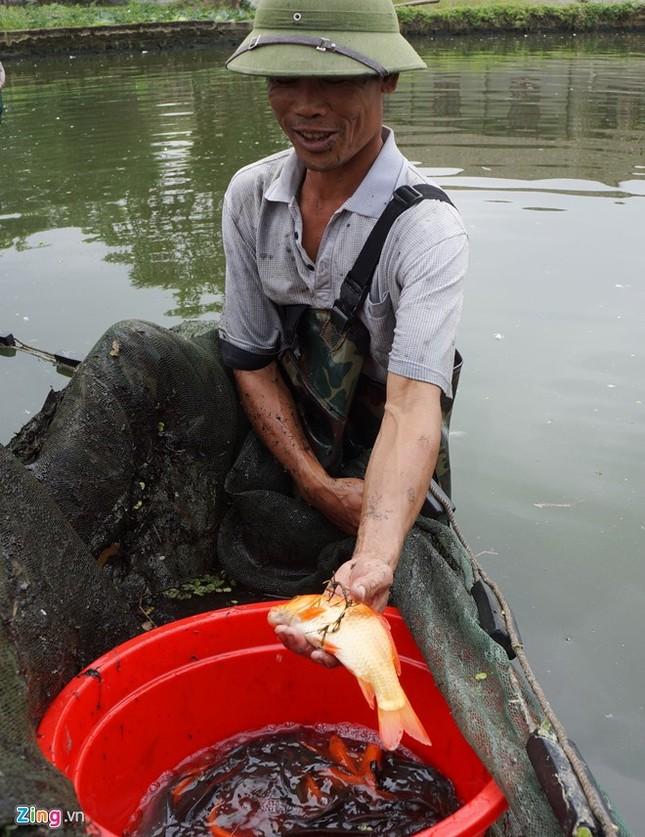 Lội bùn thu hoạch cá chép trước ngày ông Táo về trời - ảnh 2