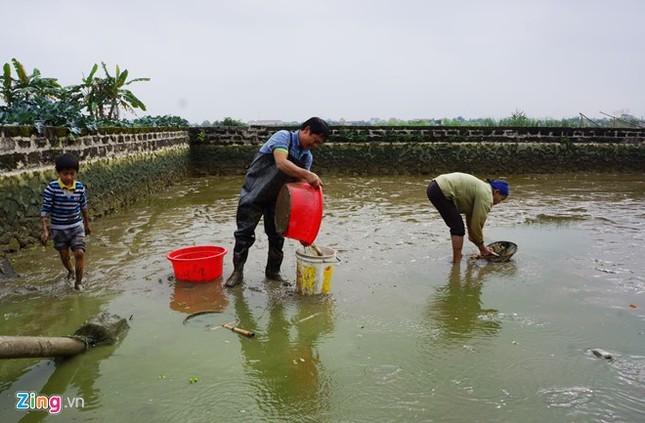 Lội bùn thu hoạch cá chép trước ngày ông Táo về trời - ảnh 3