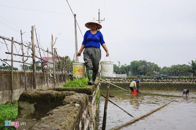 Lội bùn thu hoạch cá chép trước ngày ông Táo về trời - ảnh 5