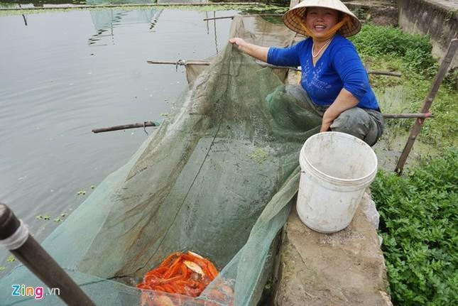 Lội bùn thu hoạch cá chép trước ngày ông Táo về trời - ảnh 6