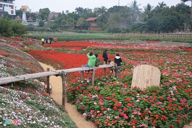 Kiếm bội tiền từ việc trồng hoa giữa lòng hồ sen - ảnh 1