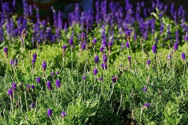 Lạc thiên đường muôn sắc hoa Sun World Ba Na Hills - ảnh 2