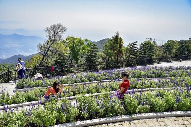 Lạc thiên đường muôn sắc hoa Sun World Ba Na Hills - ảnh 9