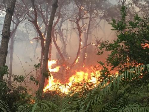 Rừng phòng hộ ở Sóc Sơn cháy suốt 8 giờ - ảnh 1