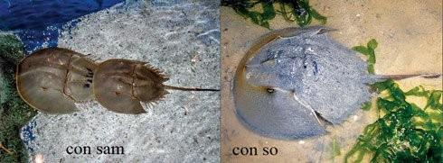 Tránh xa những loại hải sản có lượng độc tố cao gây chết người - ảnh 1