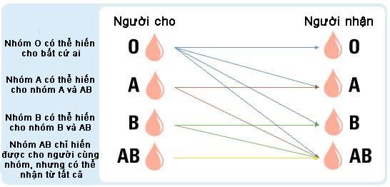 Tại sao AB là nhóm máu hiếm nhất thế giới? - ảnh 1
