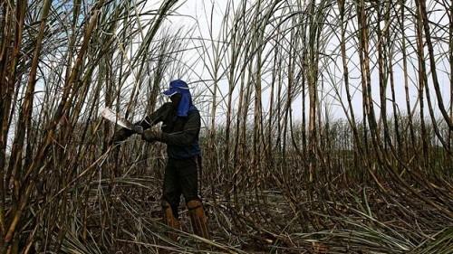 Người phụ nữ từ con nhà nông trở thành triệu phú Brazil - ảnh 1