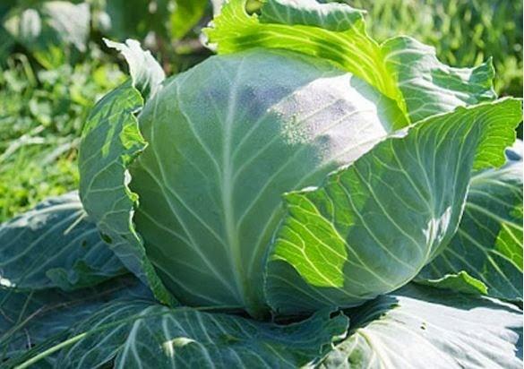Mỗi ngày ăn bao nhiêu rau quả để đủ Vitamin? - ảnh 7