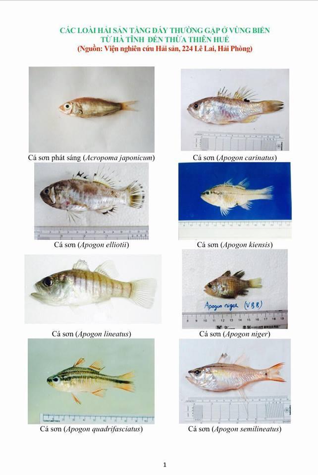 Hình ảnh các loại hải sản sống ở tầng đáy 4 tỉnh miền Trung - ảnh 1