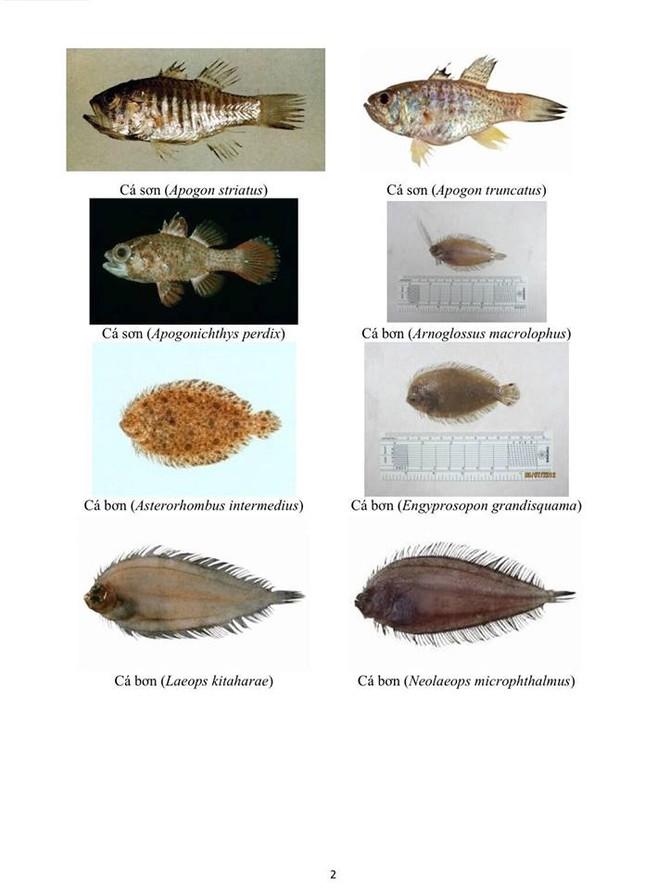 Hình ảnh các loại hải sản sống ở tầng đáy 4 tỉnh miền Trung - ảnh 2