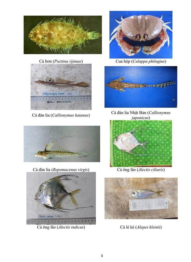Hình ảnh các loại hải sản sống ở tầng đáy 4 tỉnh miền Trung - ảnh 3