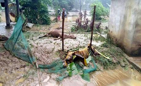 Yên Bái mất trắng 120 tỷ đồng do mưa lũ - ảnh 2