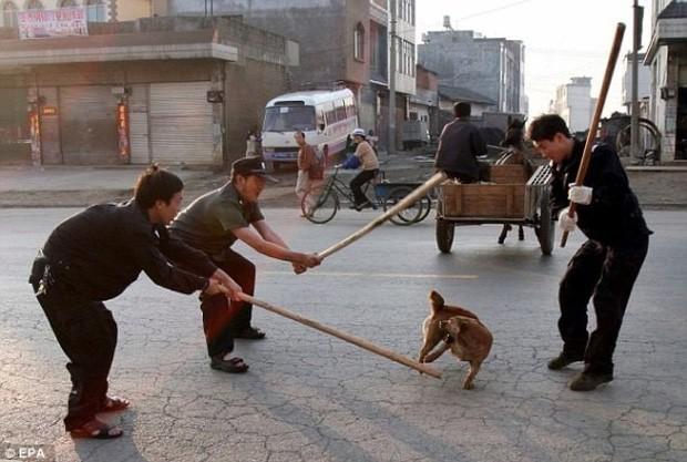 Các quy định khắt khe về quản lý thú cưng trên thế giới - ảnh 4