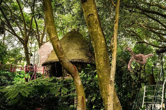 Những ngôi nhà trên cây ở Việt Nam - ảnh 1