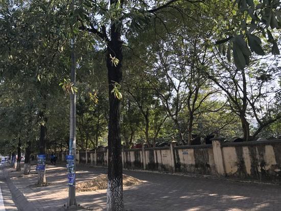 """Dự án """"Vedette"""" quận Thanh Xuân giá bèo vì ôm trọn nghĩa trang  - ảnh 4"""