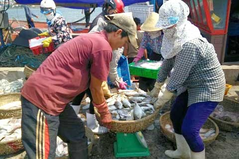 Bồi thường cho ngư dân miền Trung: Đợt 1 phải xong trước Tết - ảnh 1