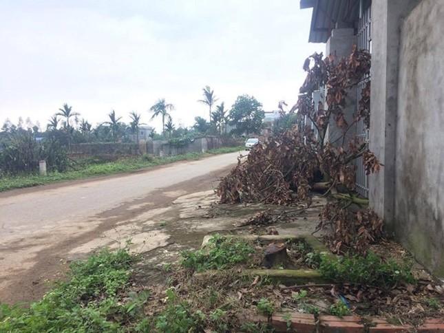 Dân Hà Nội xin để lại cây xanh, lãnh đạo xã quyết chặt để dẹp vỉa hè - ảnh 1