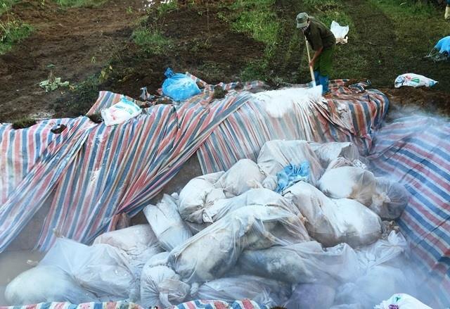 Đóng bì chôn hàng nghìn con lợn bị chết đuối ở Thanh Hóa - ảnh 2