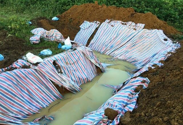 Đóng bì chôn hàng nghìn con lợn bị chết đuối ở Thanh Hóa - ảnh 3