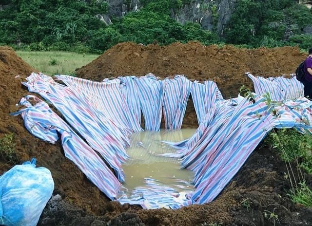 Đóng bì chôn hàng nghìn con lợn bị chết đuối ở Thanh Hóa - ảnh 4