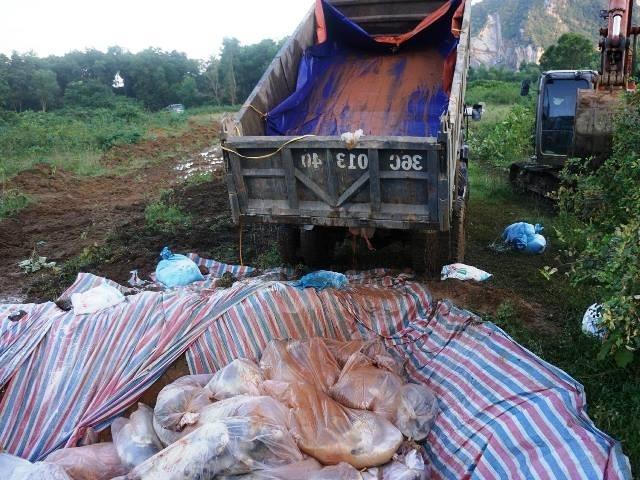 Đóng bì chôn hàng nghìn con lợn bị chết đuối ở Thanh Hóa - ảnh 7