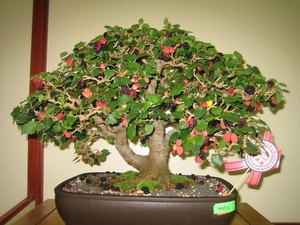 Những loại cây tuyệt đối không trồng trong nhà mà bạn nên nhớ - ảnh 1