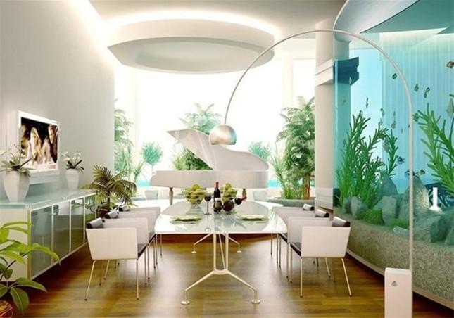 7 nơi cấm kị đặt bể cá trong nhà bạn bên biết - ảnh 1