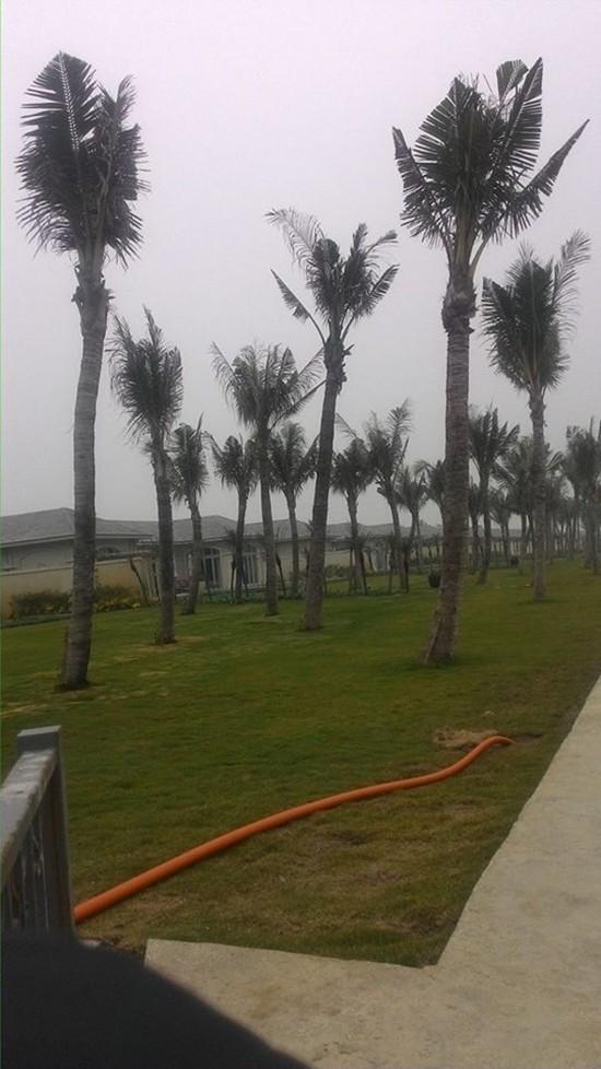 Kỳ 1: Tập đoàn FLC lấn chiếm đất rừng ven biển xây công trình? - ảnh 1