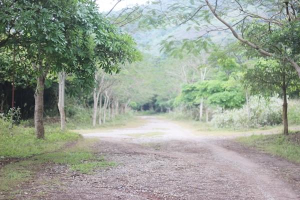 Tận mục dự án tiền tỷ bỏ hoang ở Hòa Bình - ảnh 5