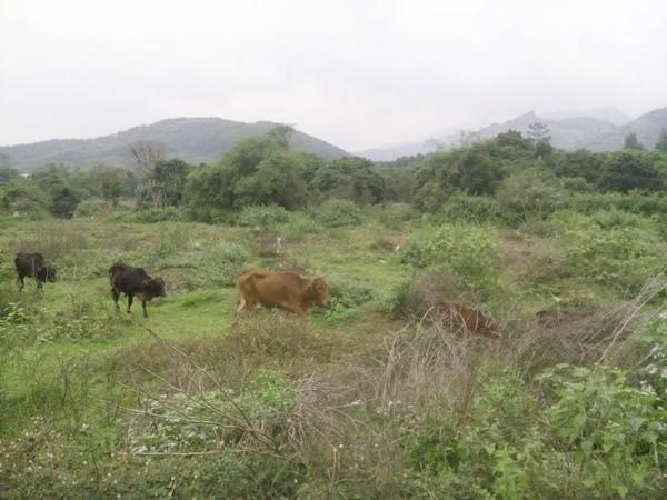 Tận mục dự án tiền tỷ bỏ hoang ở Hòa Bình - ảnh 13