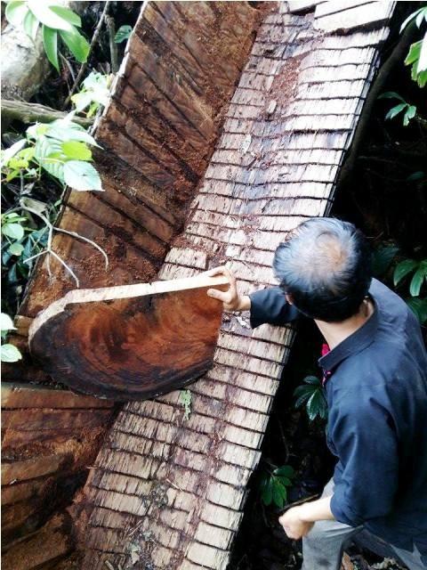 Rừng Điện Biên bị 'cạo trọc': Những cánh rừng 'chảy máu' - ảnh 2