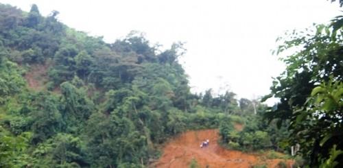 Rừng Điện Biên bị 'cạo trọc': Quản lý dân di cư phá rừng là quá sức - ảnh 1
