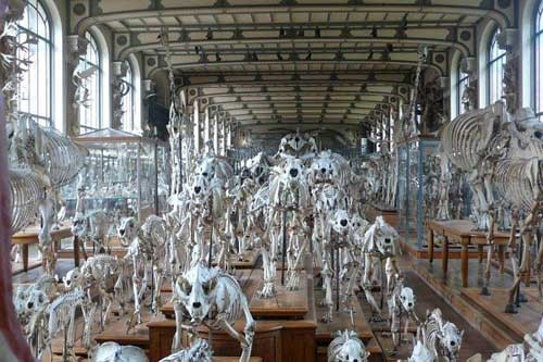 Khám phá những bảo tàng có '1-0-2' khiến người xem phải khiếp sợ - ảnh 2