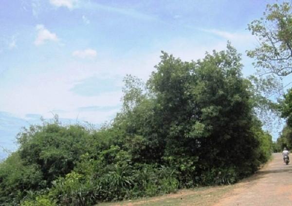 Bí ẩn chuyện quạ đen chỉ chỗ xây Nghè Ná trong rừng cấm ở Quảng Bình - ảnh 1