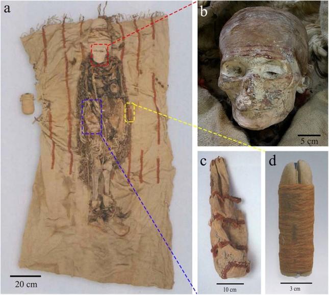 Phát hiện gậy mỹ phẩm làm từ tim bò 3.600 tuổi chôn cùng xác ướp - ảnh 1