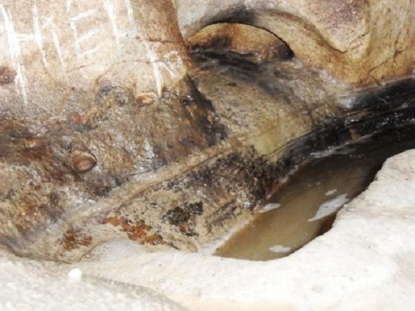 Bí ẩn bầy rắn độc canh kho giữ tiền ở Thái Nguyên - ảnh 2