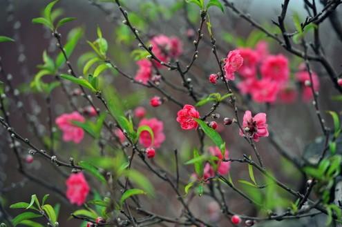 Điểm danh những loại hoa 'hút tài lộc' ngày Tết - ảnh 1